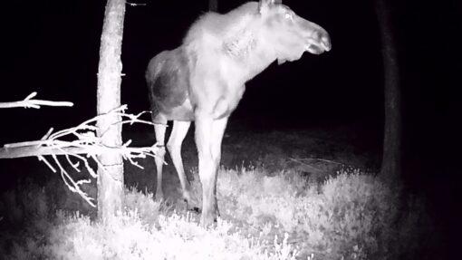 rajakaamera pilt öösel